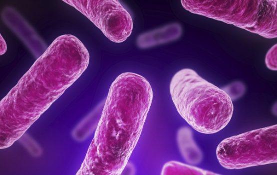 Probiotiká a rýchlejšie spaľovanie tuku