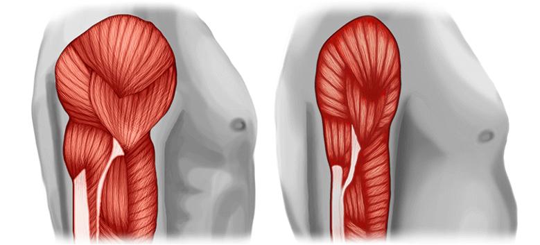 Strata svalov